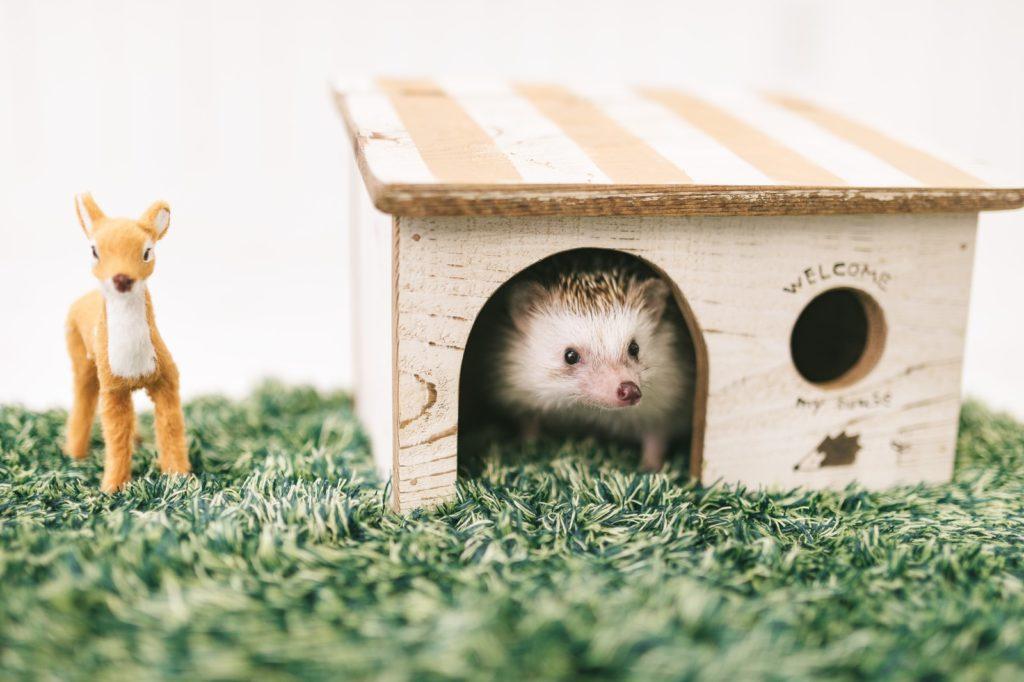 ハリネズミが家に入っている画像